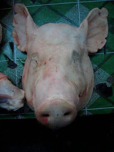 tête de porc cochon