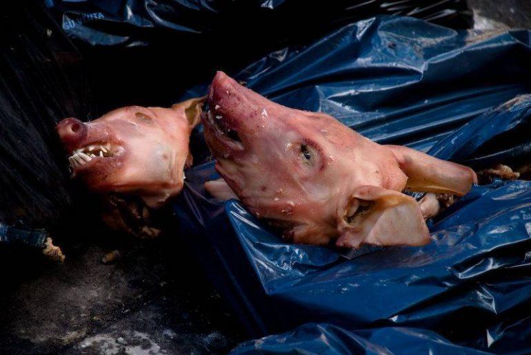 Têtes de porc déposées sur le chantier de la mosquée