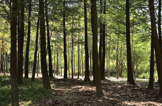 Royaume-Uni : une association de jeunes musulmans participe à un vaste projet de plantation d'arbres