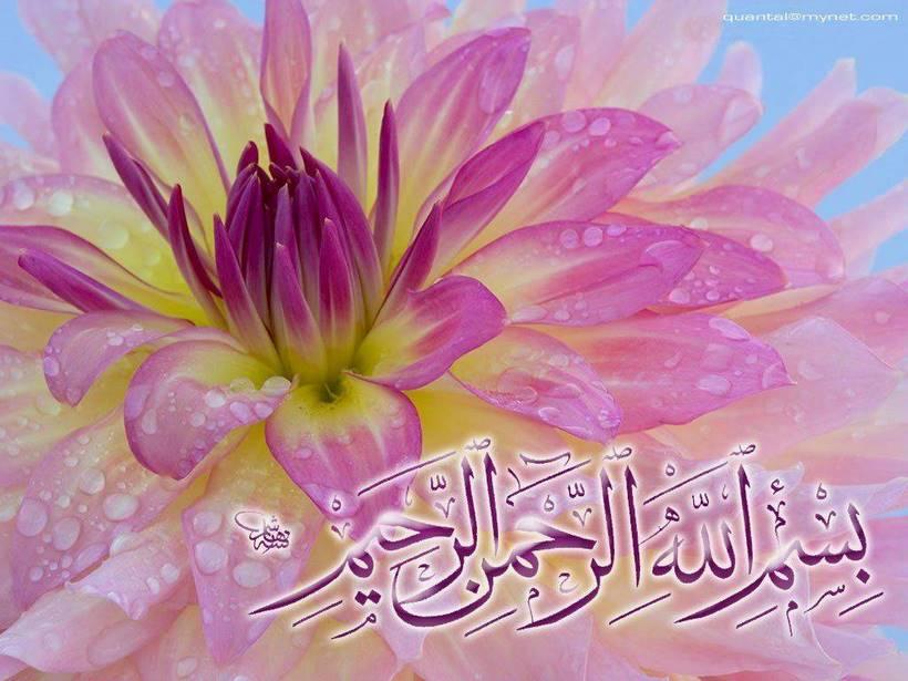 fleur-islam
