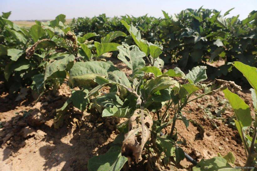plantesproduitstoxiquesisrael