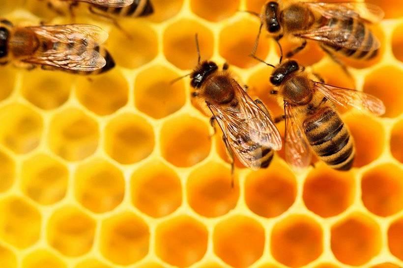 Les bienfaits du miel en islam confirm s par la science - La ruche a miel ...
