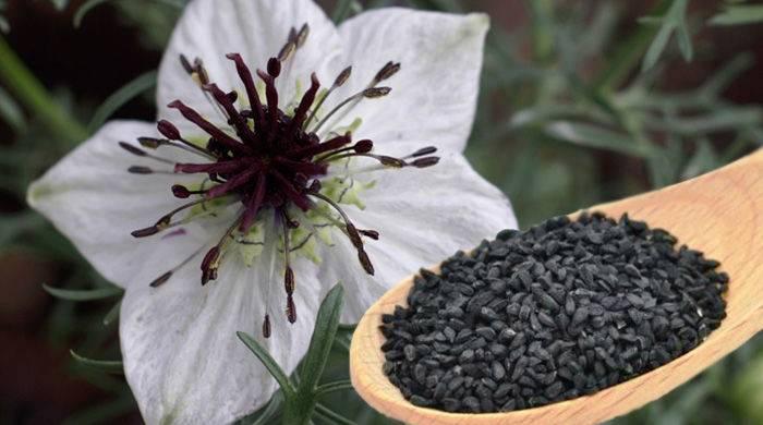 black-seed-nigella-sativa