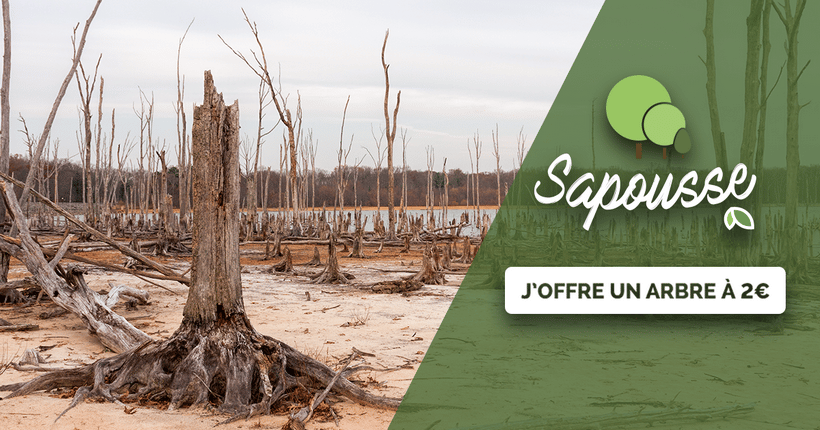 Campagne LIFE : Pourquoi SAPOUSSE ?