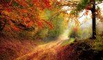 Nouvelle étude santé : deux heures par semaine dans la nature