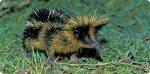 La création est Ajib #11 De quel animal s'agit-il?
